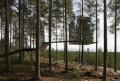 Case sugli alberi: premiato il progetto del concorso di idee organizzato dal Comune di Cles